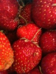 Photo of local strawberries