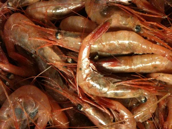 Lots o' shrimp